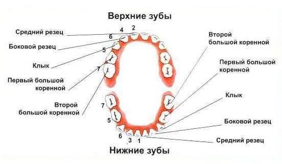 Глазные зубы: что это и что с ними делать?